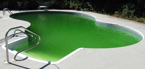 Swimming pool green
